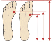 Metatarsal Illustration